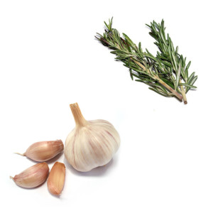 garlicband2 copy